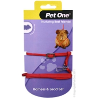 Leash & Harness Guinea Pig Red